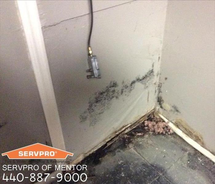 Mold Remediation Mentor, OH Before